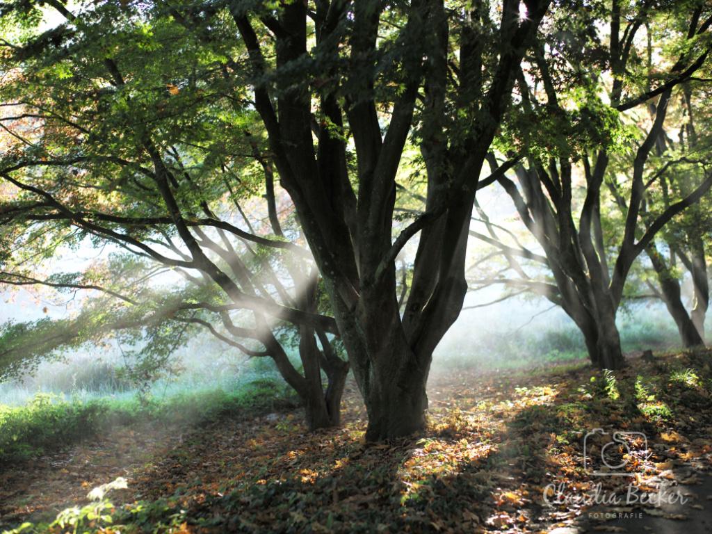 Baum-mit-Lichteinfall