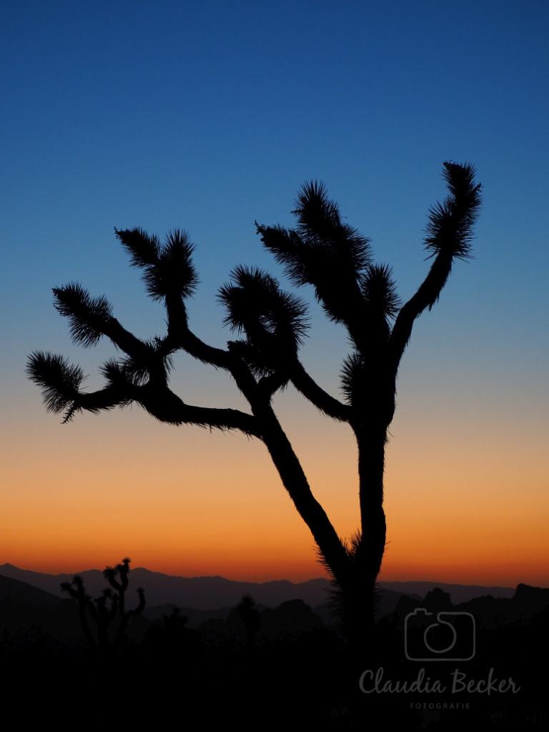 Yoshua Tree
